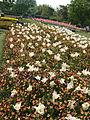 Flower-center142533.jpg