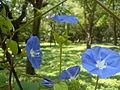 Flower @ Cubbon Park -4.jpg