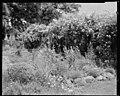 Flower Studies Garden Group, unidentified house, Fauquier County, Virginia LOC 14283018095.jpg