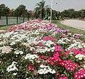 Flowerbed in Pakistan.jpg