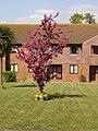 Flowering tree in Louden Court - geograph.org.uk - 407035.jpg