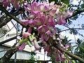 Flowering tree in all its glory.jpg