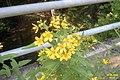 Flowers (31285437893).jpg