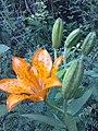 Flowers - Fiori (19332744755).jpg