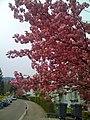 Flowers - panoramio (5).jpg