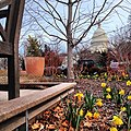 Flowers in February at US Botanic Garden. (8445064442).jpg