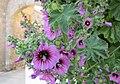 Flowers in Stone Walled Garden - panoramio.jpg