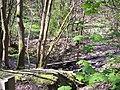Footbridge in Dean Wood - geograph.org.uk - 1262063.jpg