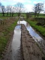Footpath Between Tinwald And East Tinwald - geograph.org.uk - 353523.jpg