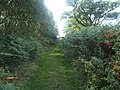 Footpath in Black Heath Forest near Snape - geograph.org.uk - 229422.jpg