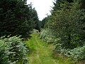 Footpath in Knockman woods - geograph.org.uk - 503751.jpg
