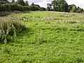 Footpath through Meadow - geograph.org.uk - 233415.jpg