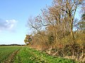 Footpath to Orby - geograph.org.uk - 620326.jpg