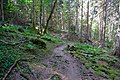 Forêt @ Le Grand-Bornand (50959885158).jpg