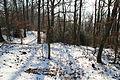 Forêt départementale de Beauplan sous la neige 2012 05.jpg