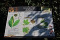 Forêt de Bon-Secours 02.jpg