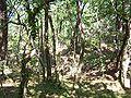 Forêt de la Coubre 004.jpg
