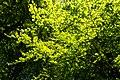 Forest Light (7442690120).jpg