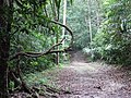 Forest Path - Tikal Archaeological Site - Peten - Guatemala - 01 (15869703831).jpg
