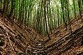 Forest Romania (42756636234).jpg