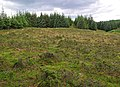 Forest clearing - geograph.org.uk - 909636.jpg