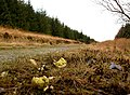 Forest road with brussels sprouts - geograph.org.uk - 630138.jpg