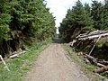 Forestry Track - geograph.org.uk - 523787.jpg