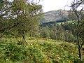 Former farmland, Glen Prosen - geograph.org.uk - 227186.jpg
