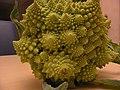 Fractal broccoli(2).JPG