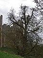Framlingham Castle (24309669583).jpg