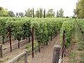 Franciscan Winery, St. Helena, California, USA (6479604173).jpg