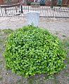 Friedhofspark Pappelallee (30).jpg