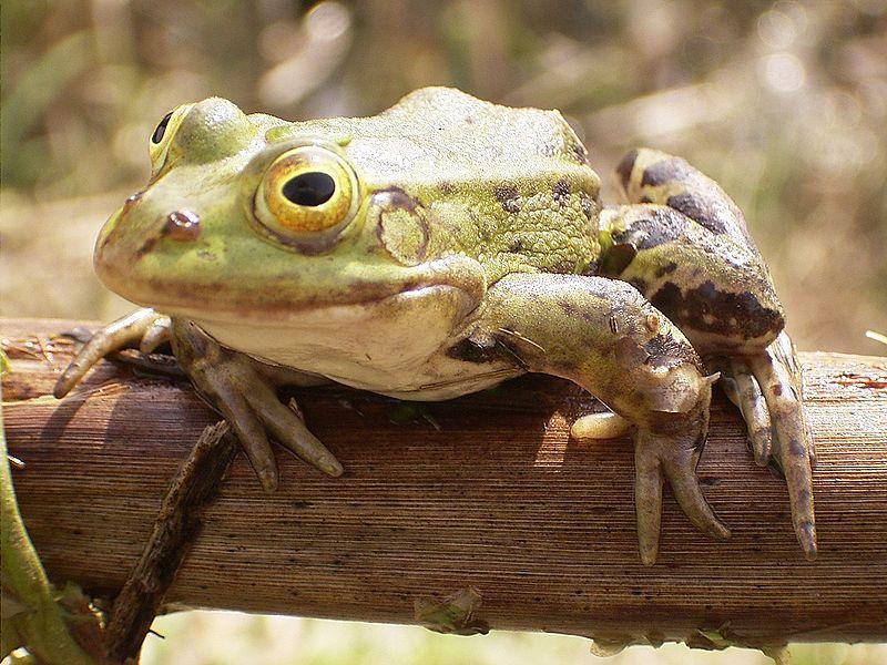Toad porn