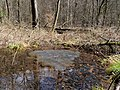 Frog spawn in stream at the Taunus.jpg
