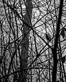 Fruens Plantage - panoramio (10).jpg