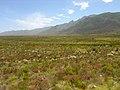 Fynbos-landscape-3.jpg