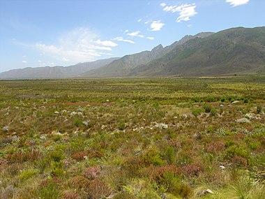 380px-Fynbos-landscape-3.jpg