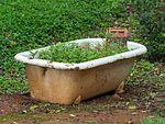 Garden in a bath tub (31293566323).jpg