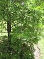 Gardenology.org-IMG 0035 rbgm10dec.jpg