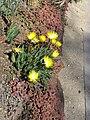 Gardenology.org-IMG 0375 hunt07mar.jpg
