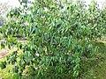 Gardenology.org-IMG 7093 qsbg11mar.jpg