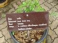 Gardenology.org-IMG 7689 qsbg11mar.jpg