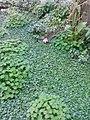 Gardens in Baghdad 24.jpg