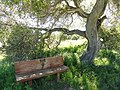 Garland Ranch Regional Park - Carmel Valley, CA - DSC06857.JPG