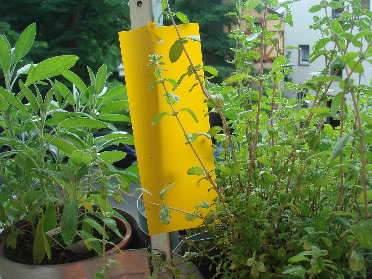 Gelbtafel wikipedia for Gelbsticker gegen fliegen