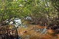 Gfp-florida-keys-long-key-state-park-mangrove-stream.jpg
