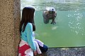 Girl and beaver with glass in between. Privacy release status unknown. (08870474b69849a58bd64f8e10710009).jpg