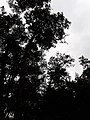 Godawari botanical garden 20180912 125137.jpg