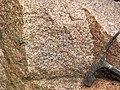 Granite (Giants Range Batholith, Neoarchean, 2.67-2.68 Ga; Rt. 1 roadcut, south of Ely, Minnesota, USA) 4 (21264353838).jpg
