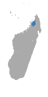 Gray-backed Sportive Lemur area.png